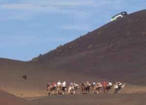 Camels at Timanfaya