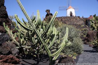 Der Kaktusgarten bei  Guatiza auf Lanzarote